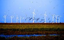 盐城海滨的风电场